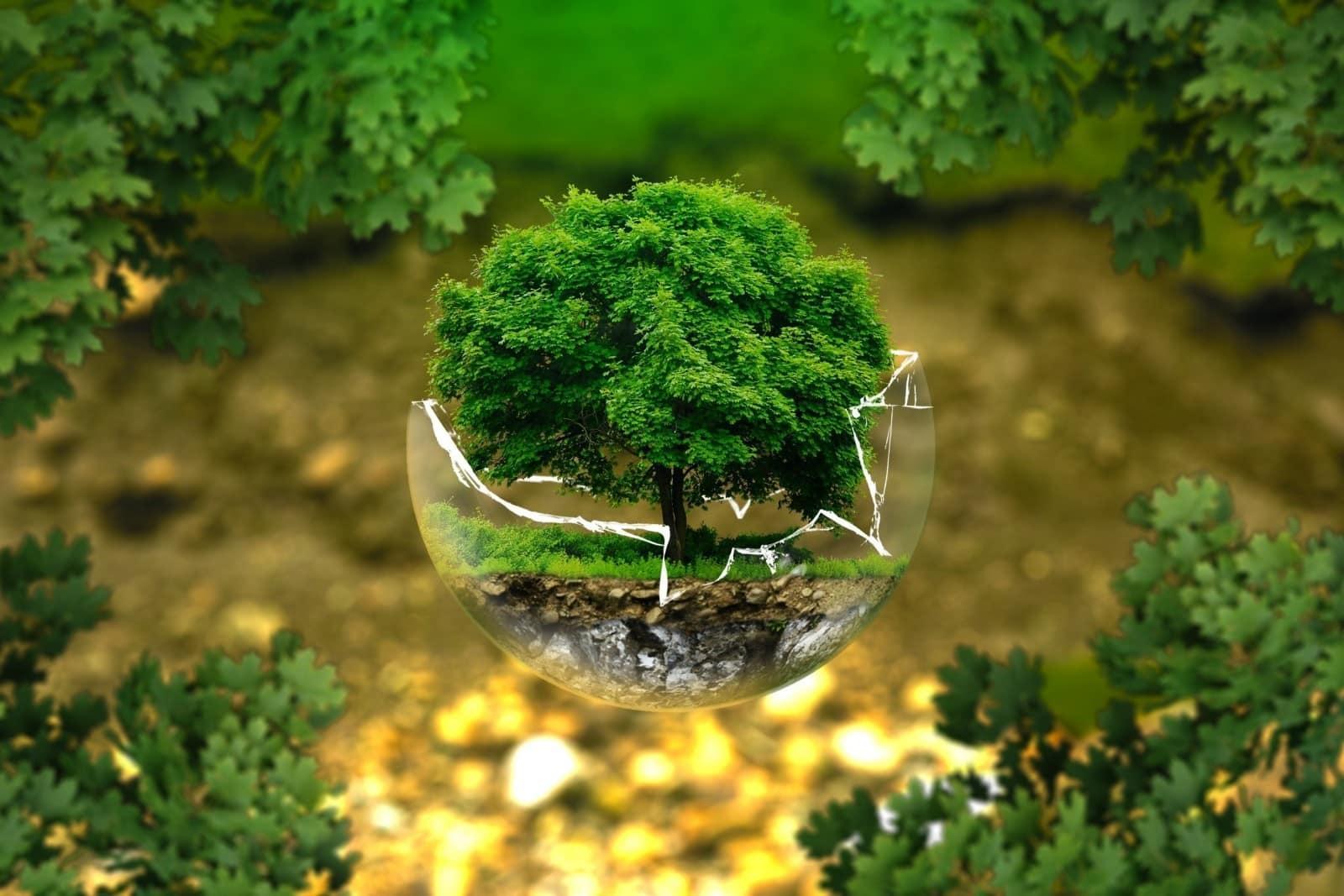 entreprise eco responsable