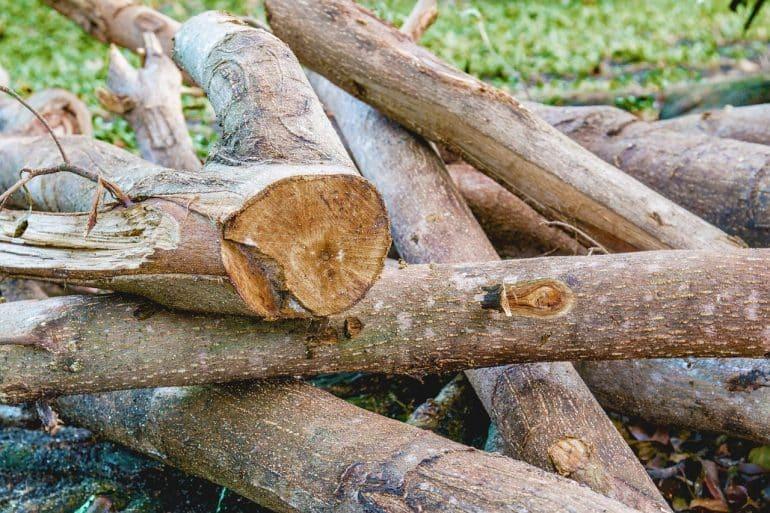 bois et environnement